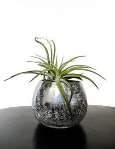 planten-bloemist-mijdrecht