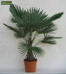 palmshop